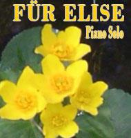 Für Elise Piano Solo