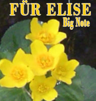 Für Elise Big Note